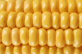 stock photo of corn cob close-up  - Corn on the cob kernels close up shot - JPG