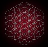 picture of pentagram  - Flower of life - JPG
