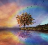 picture of grass bird  - a tree being reflected in the water and colouring sky in the background and a rainbow - JPG