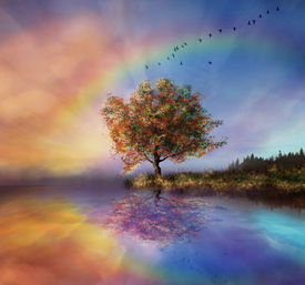 picture of water bird  - a tree being reflected in the water and colouring sky in the background and a rainbow - JPG