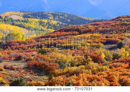 Rolling hills of autumn trees