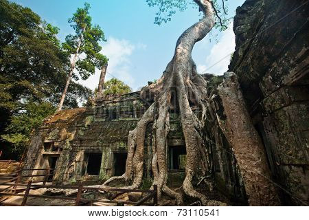 Old banyan tree growing in the ancient ruin of Ta Phrom temple, Angkor Wat, Cambodia.
