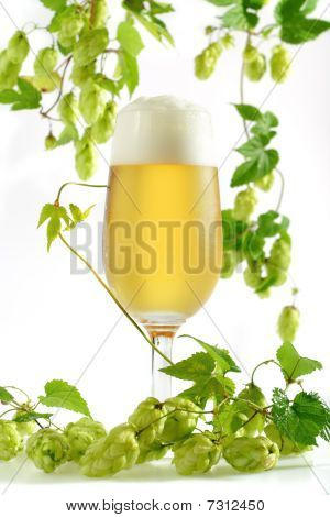 Beer In Glass With Hop Sprouts