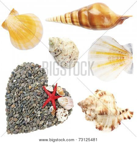 Collage of shells collage of shells and other beach flotsam isolated on white