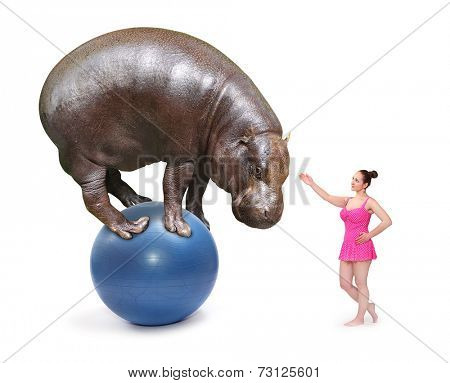 Circus clown girl and african Hippo balancing on a blue ball.