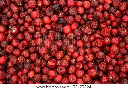Dog rose hips are drying