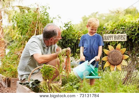 Grandfather And Grandson Working On Allotment