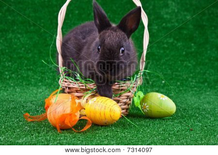 Black Rabbit And Eggs