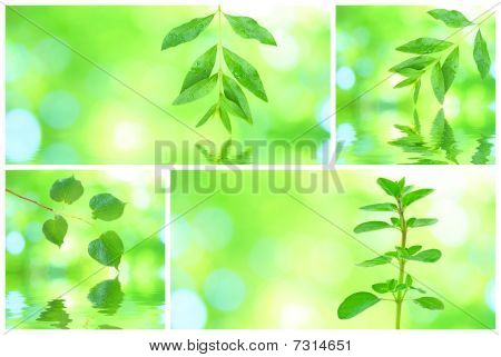 Collage of different green leaves