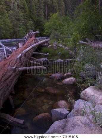 Log and Rocks