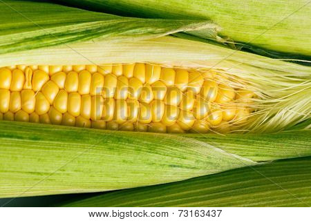 the closeup of sweet corn