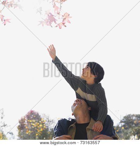 Mixed Race father and son in park
