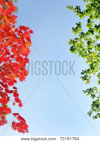 red and green fall maple leaves natural background