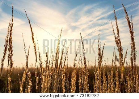 dry grass sunset