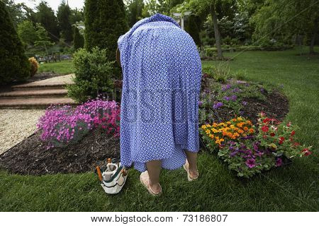 Hispanic woman gardening
