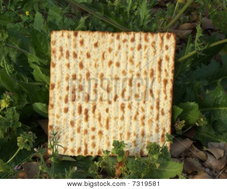 Matza in the wild