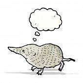 picture of shrew  - shrew illustration - JPG