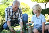 picture of grandpa  - Grandpa with grandson gardening together in summer time - JPG