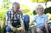 pic of grandpa  - Grandpa with grandson gardening together in summer time - JPG