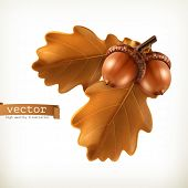 picture of acorn  - Oak branch with acorns - JPG