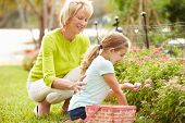 pic of granddaughters  - Grandmother With Granddaughter On Easter Egg Hunt In Garden - JPG