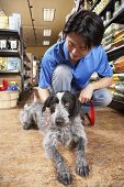 picture of petting  - Asian man petting dog in pet store - JPG