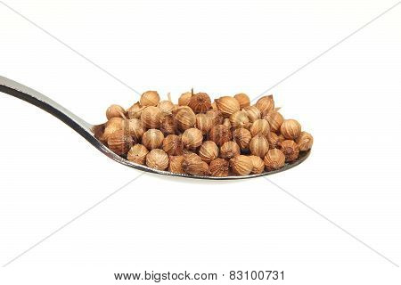 Dried Coriander Seeds On A Teaspoon