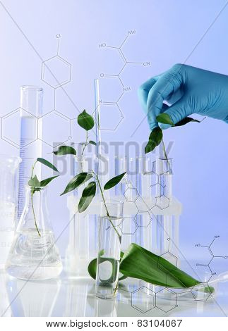 Test tubes with plant on light background
