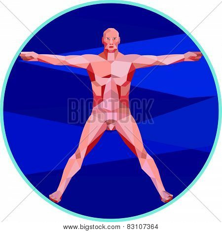 Da Vinci Man Anatomy Low Polygon