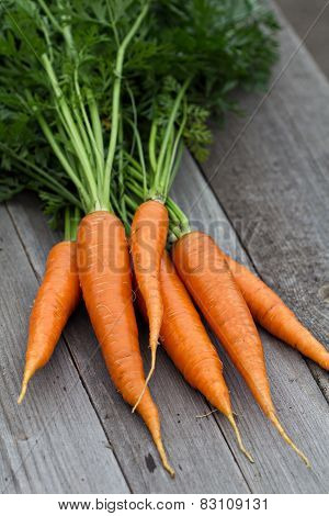 Freshly harvested carrots with green leaves