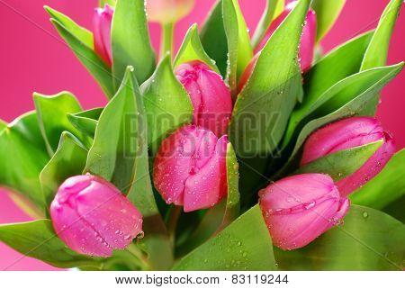 Bunch Of Fresh Pink Tulips