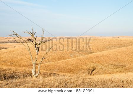Lone Tree In Flint Hills Of Kansas