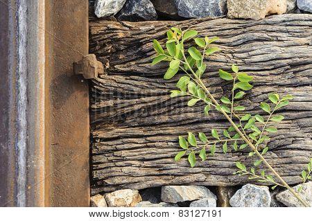 Wood Stone Plant And Steel Railway