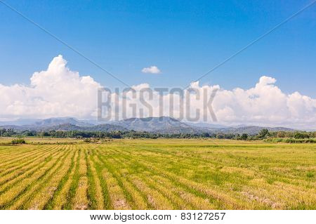Rice Field Among Mountain And Blue Sky