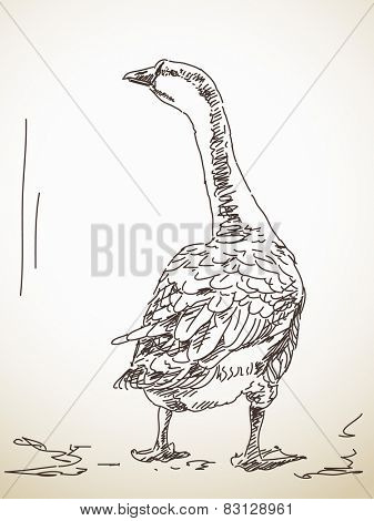 Goose from back Vector Sketch Hand drawn illustration
