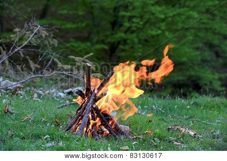 Campfire on green meadow in forest