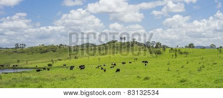 Australian Agriculture Beef Cattle Farming