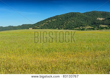 Field Of The Grass