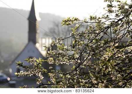 Cherry Tree And Chapel In The Spring