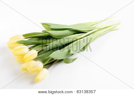 Fresh Bright Yellow Tulips On A Light Background
