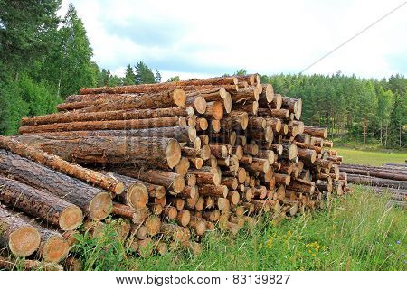 Summer Landscape With Stack Of Pine Logs