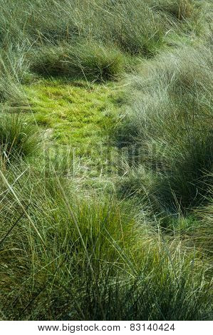 Wild grass with a flattened patch
