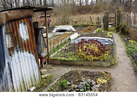 Kitchen Garden Of The European Poor Person