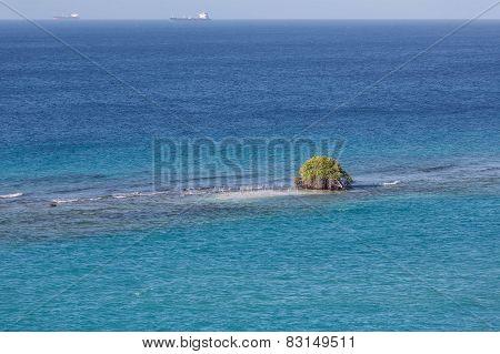 Tree Growing In Ocean