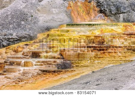 Yellowstone, Travertine Terrace, Mammoth Hot Springs