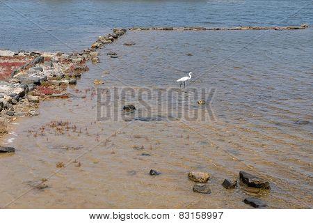 Heron And The Sea