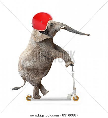Funny elephant with protective helmet riding a push scooter. Safety and insurance concept.