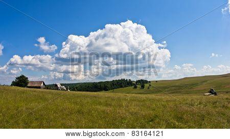 Grassland hills landscape at sunny summer day