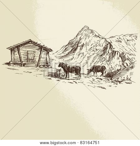 Cows in the mountains - hand drawn illustration