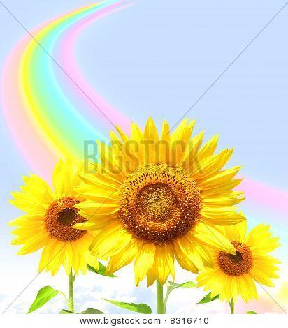 Rainbow And Sunflowers